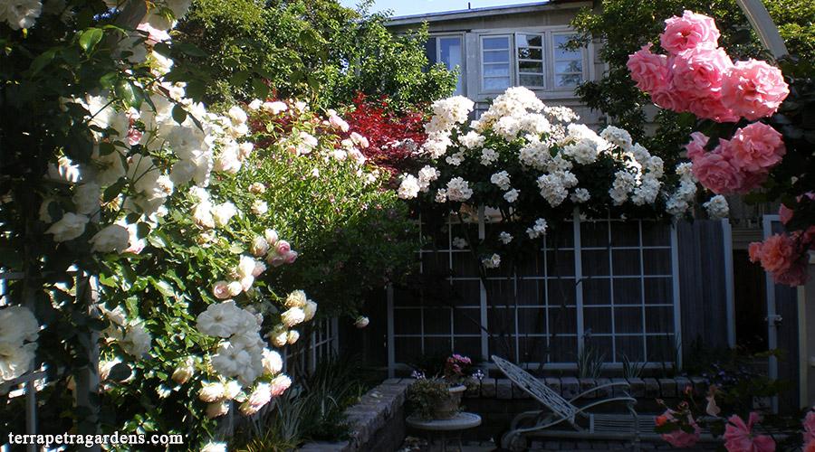 garden_106