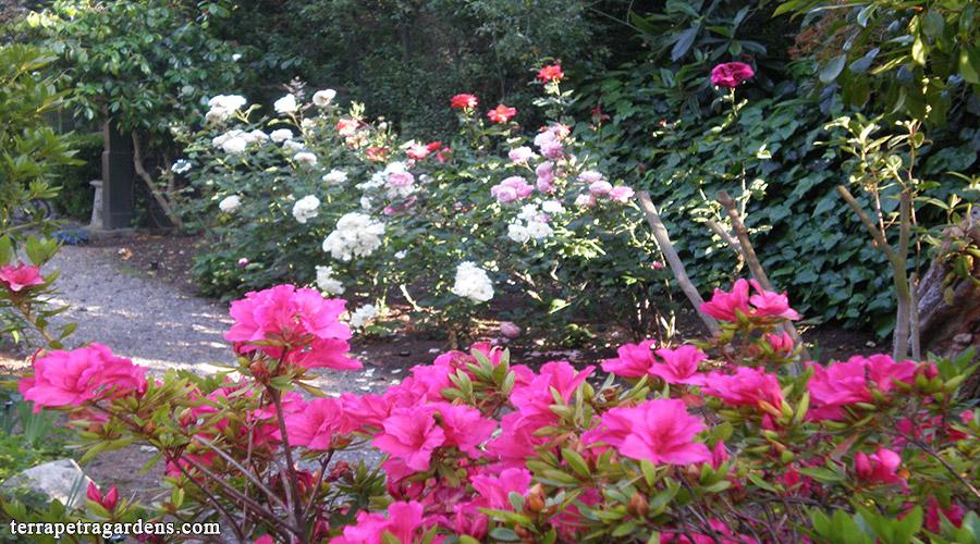 garden_110