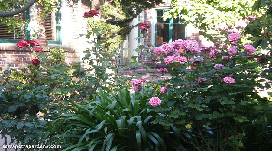 garden_113
