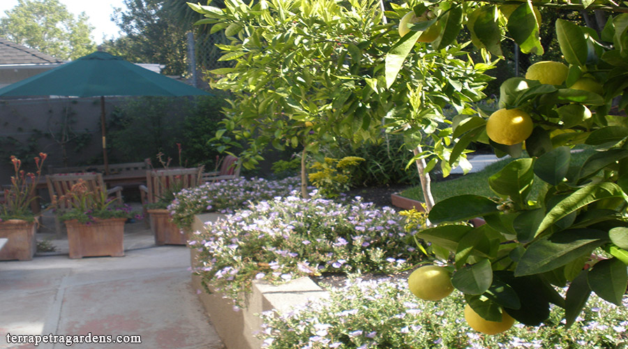 garden_123