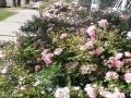 garden_100