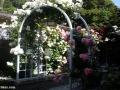 garden_105