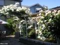 garden_107
