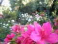 garden_109
