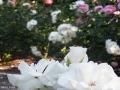 garden_111