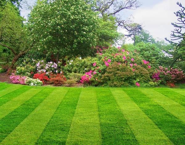 1281075648_lawn