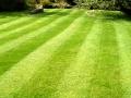 hg.lawn.Cook.jpg